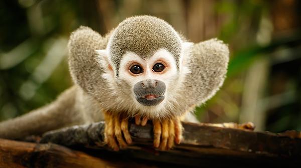 zookeeping technique - monkey