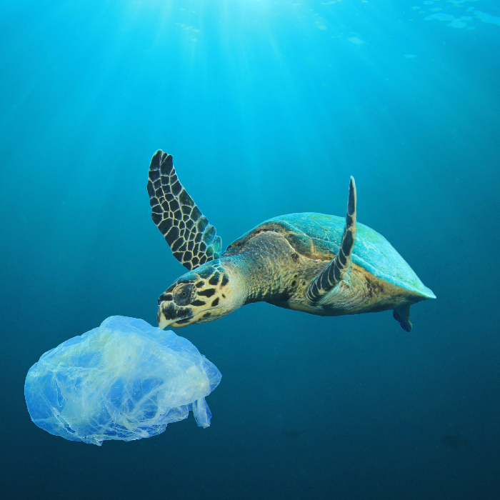 phorest ocean cleanup